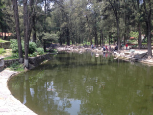 lake of birds bosque los colomos guadalajara mexico