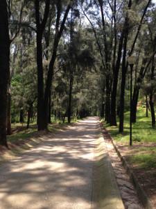 paved pathway bosque los colomos guadalajara mexico