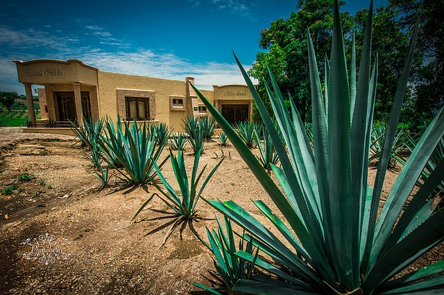 a distillery in tequila